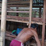 Usaha rumahan ternak ayam petelur untuk pemula di kota Demak dan sekitarnya